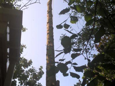 Lichfield Tree Surgery